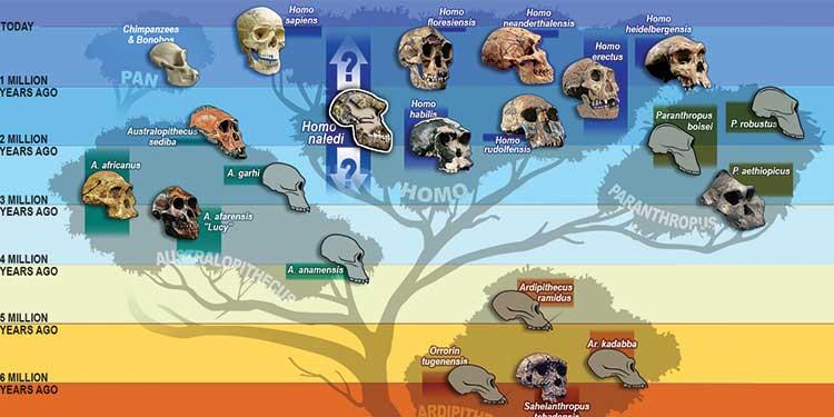 İnsanların Hâlâ Evrimleştiğinin 5 İşareti