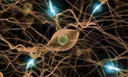 Nöron-Benzeri Elektronik Sistemlerde Pektin Kullanılacak