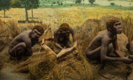 1.2 Milyon Yıl Önce İnsan Ataları Ne Yiyordu?