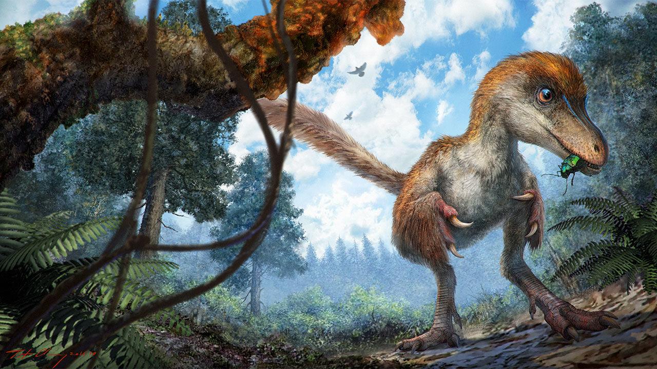 99-milyon-yilllik-dinozor-tuyu-fosili-bilimfilicom
