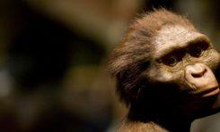 Bilinen En Eski İnsan Atası 'Lucy', Ağaca Tırmanma Ustası Olabilir