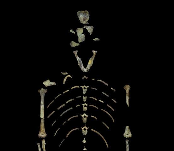 bilinen-en-eski-insan-atasi-lucy-agaca-tirmanma-ustasi-olabilir-iskelet