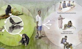 Ebola Türlerinden Biri İçin Aşı Geliştirildi