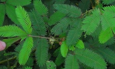 Pavlov'un Bitkileri: Sinyalleme Ağları Sinir Sistemine Eşdeğer Olabilir mi?