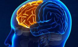 Otizmli Bireylerin Beyinleri, Alışılmadık Şekilde Simetrik Özellik Gösteriyor