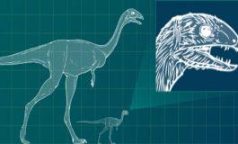Yeni Keşfedilen Dişsiz Yetişkin Dinozor