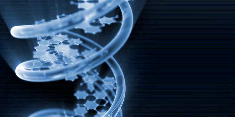 DNA Alfabesinde 6 Harf Olan Yaşam Formu Üretildi