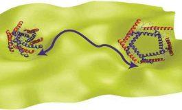 Proteinlerin İşleyişini Açıklayan Yeni Bir Kuram Önerildi