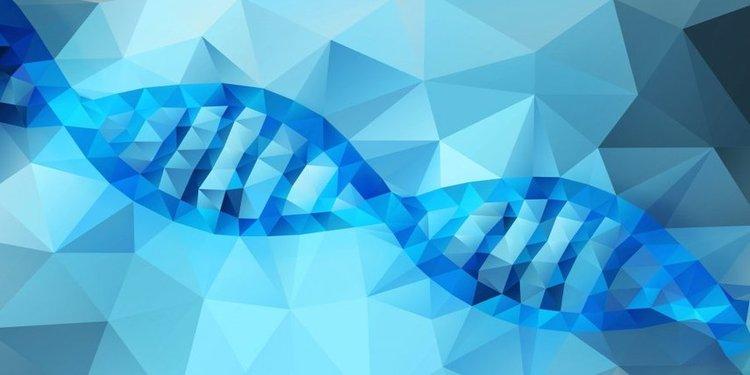 DNA Nedir?