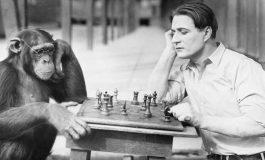 İnsan Maymundan Geliyorsa, Şimdiki Maymunlar Neden İnsan Olmuyor?