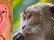 İnsan Vücudunda Evrimin İzlerine 7 Örnek