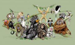 Primatların Genel Özellikleri ve İnsanın Evrimine Bıraktıkları Miras