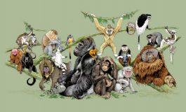 Primatların Genel Özellikleri ve İnsan Evrimine Bıraktıkları Miras