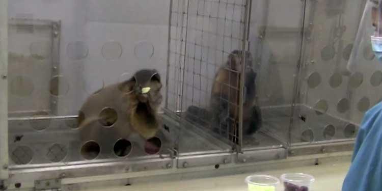 Adalet Yoksa Oyun da Yok: Hayvanlarda Adalet Duygusu