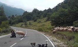 Hayvanlarda Öfke Davranışları