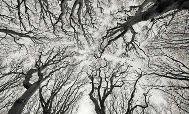 Nöronların Daha Önce Hiç Bilmediğimiz Biçimde İletişim Kurduğuna Dair Deliller Elde Edildi