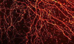 Beynin Öğrenişi Entropi Kontrolünde Olabilir