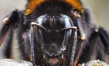 Yaban Arılarının Öğrenme ve Problem Çözme Yetenekleri