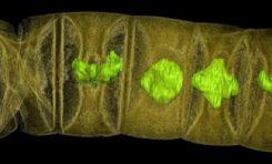 1,6 Milyar Yıllık Kayada Çok Hücreli Fosilleri Bulundu