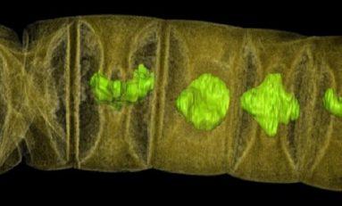 Dünya'nın En Yaşlı Bitki Fosilleri ve Çok Hücreli Yaşamın Evrimi
