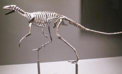 Dinozorlar İki Ayaklarının Üzerinde Yürümeyi Nasıl Öğrendi?