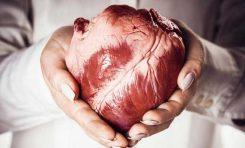Kalp Atışının Arkasındaki Fizik