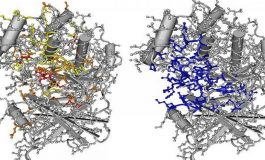 Binlerce Nadir Mutasyon Kanser İle İlişkilendirildi