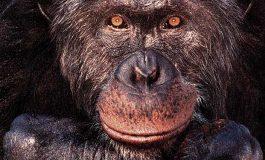 Hayvanlar Soyut Bilgiye Sahip mi?