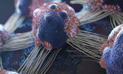 İlk Klinik Araştırmalar, Kanser Aşısının Tümör Oluşumunu Engelleyebileceğini Gösteriyor