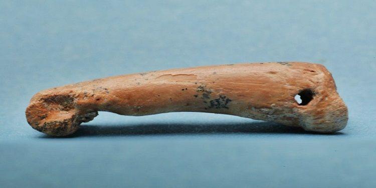 Tarih Öncesi İnsanlar Ada Hayvanlarının Kemiklerinden Aksesuarlar Yapıyordu