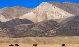 Tibetli İnsanlar Yüksek Rakımda Yaşam İçin Adaptasyonlara Sahipler
