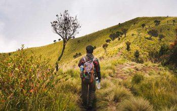 Yürümek, Beyinde Nasıl Bir Değişime Sebep Oluyor?