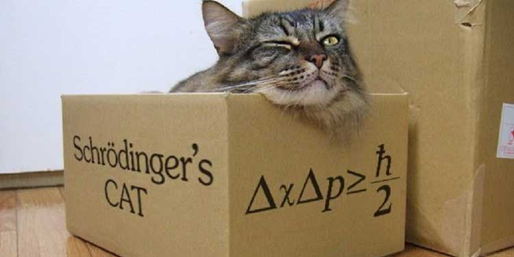 """Fizikçiler Schrödinger'in Kedisini """"Üretmeye"""" Çalışıyor"""
