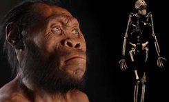 Homo naledi'nin 250.000 Yıl Önce Yaşamış Olması Ne Anlama Gelir?
