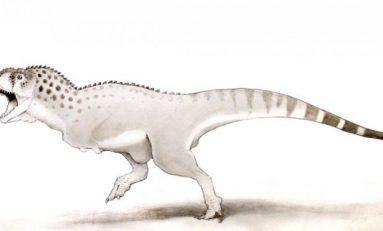 Son Afrikalı Dinozor Fas'ta Bir Madende Keşfedildi