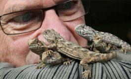 Tuatara: Yeni Zelanda'nın Üç Gözlü Minik Ejderhası