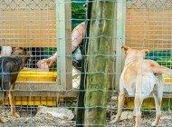 Kurtlar ve Köpekler Adaletsizliğe Tepki Gösteriyor