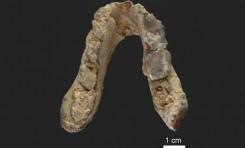Şempanzelerle Son Ortak Atamız Bir Avrupalı Olabilir Mi?