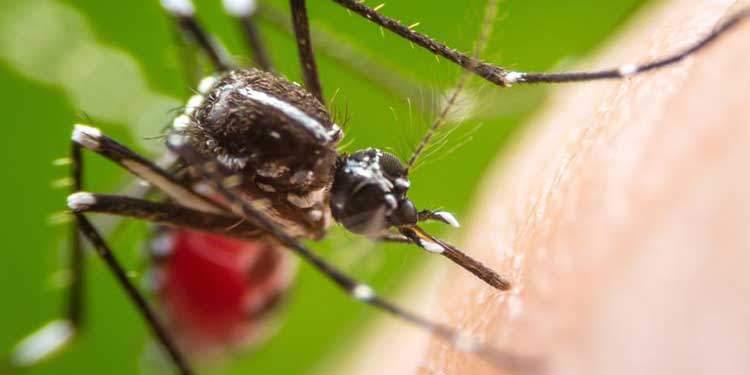 Sivrisinek Davranışlarını Yönlendirmek İçin Işık Kullanıldı