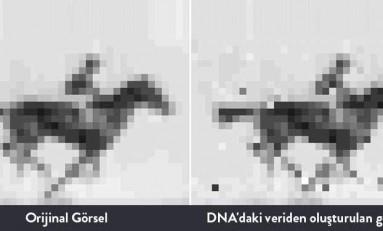 İlk Kez Bir Bakteri Hücresinin DNA'sına Hareketli Görsel Kaydedildi ve Oynatıldı