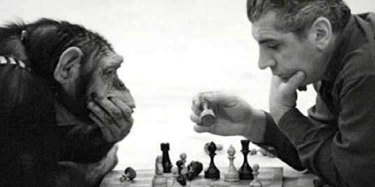 Neden En Zeki Primat İnsandır?