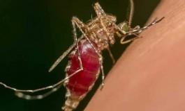 Sivrisineklerin Emdikleri Kandan DNA Tespiti