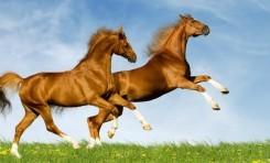 Atların Neden Tek Tırnağı Vardır?