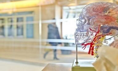 Beyindeki Küçük Damar Problemleri Bilişsel Bozukluklara Neden Olabiliyor