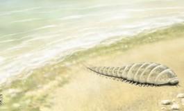 Ozonosfer: Karada Yaşamın Kilidini Açan Anahtar