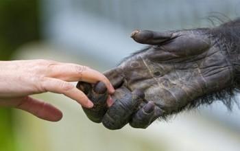 Evrimsel Süreçte İnsanlar Maymunlardan Ne Zaman Ayrıldı?