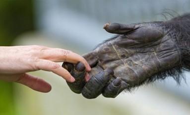 Evrimsel Süreçte İnsanlar, Diğer İnsansı Primatlardan Ne Zaman Ayrıldı?