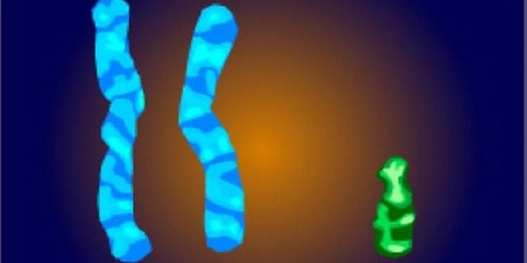 Kısırlığın Genetik Sebeplerini Çözebilen Yeni Teknik