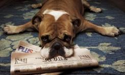 Köpekler, Üzgün Olup Olmadığımızı Sesimizden Anlayabiliyor