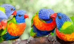 Kuş Tüylerinin Karmaşık Desenleri Nasıl Oluşuyor?